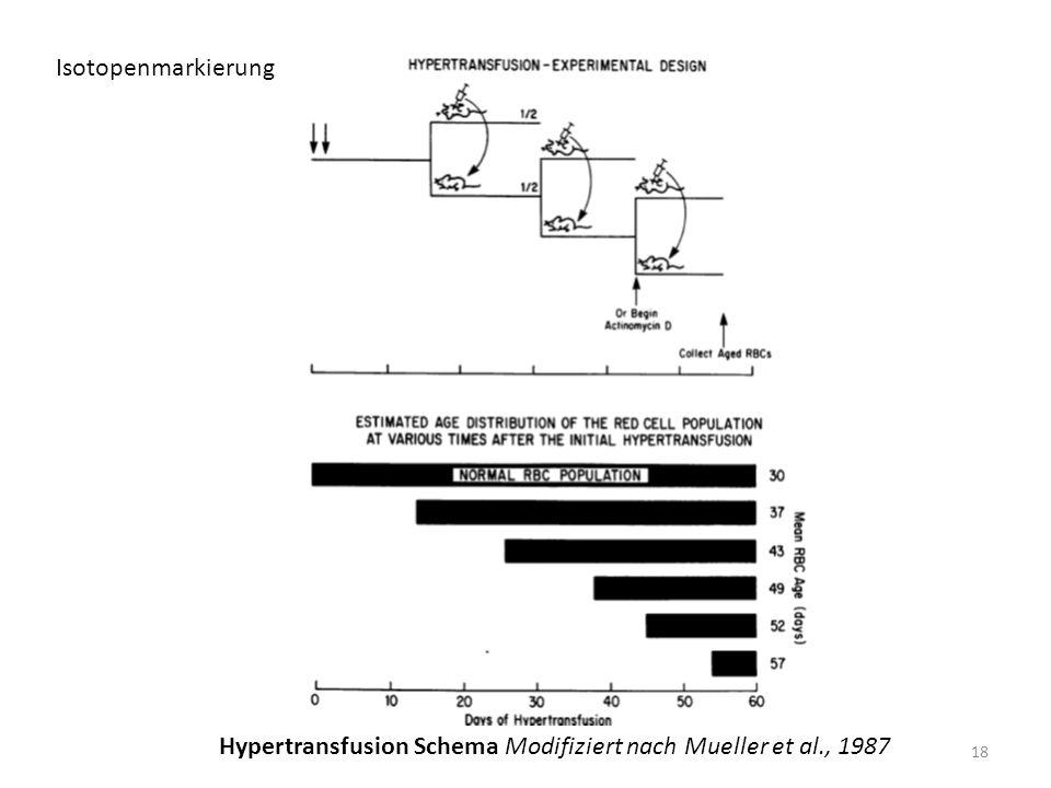 Isotopenmarkierung Hypertransfusion Schema Modifiziert nach Mueller et al., 1987