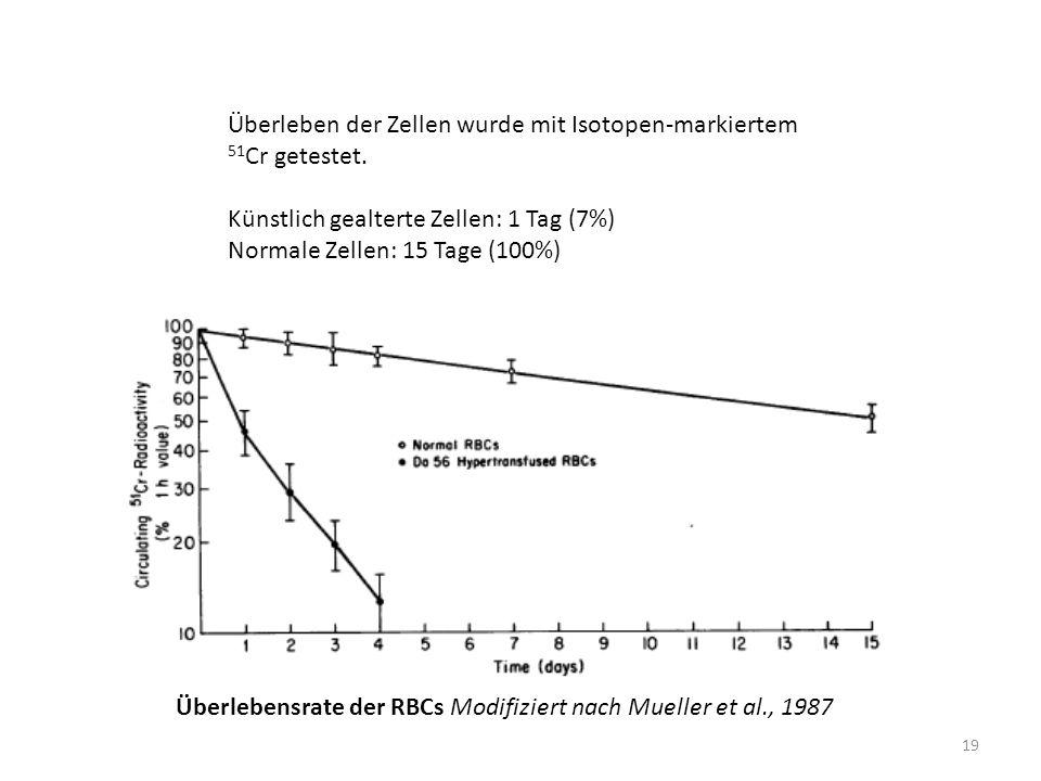 Überleben der Zellen wurde mit Isotopen-markiertem 51Cr getestet.