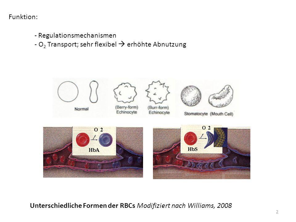 Funktion: Regulationsmechanismen. - O2 Transport; sehr flexibel  erhöhte Abnutzung.