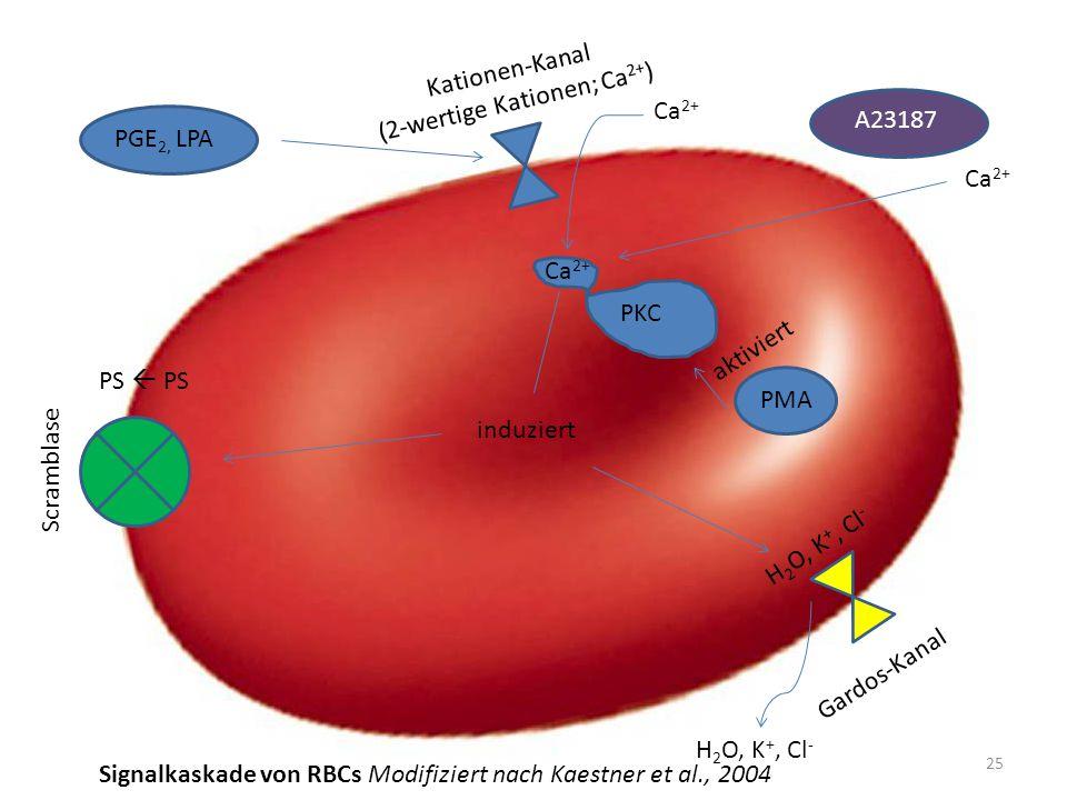 (2-wertige Kationen; Ca2+)