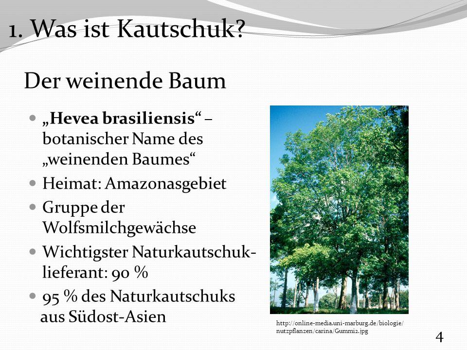 1. Was ist Kautschuk Der weinende Baum