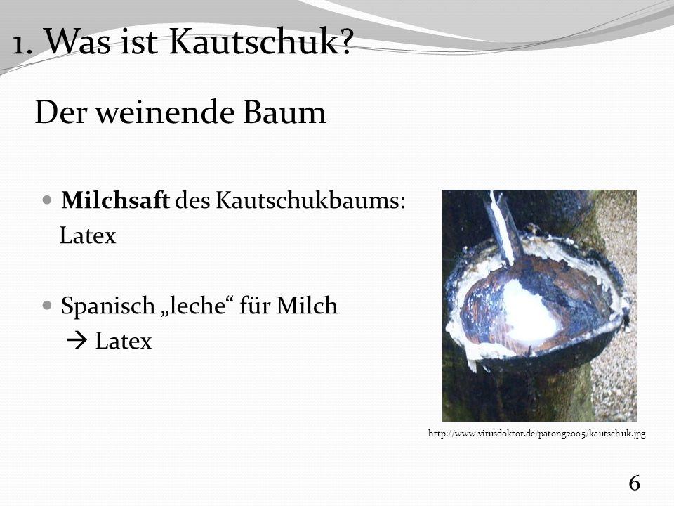1. Was ist Kautschuk Der weinende Baum Milchsaft des Kautschukbaums: