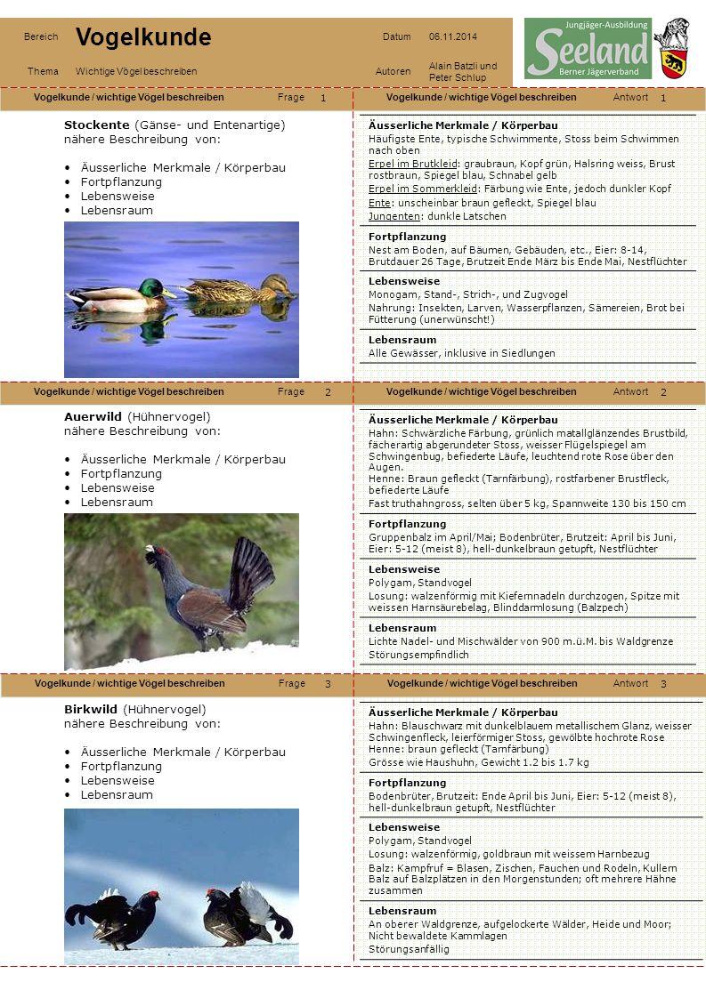 Stockente (Gänse- und Entenartige) nähere Beschreibung von: