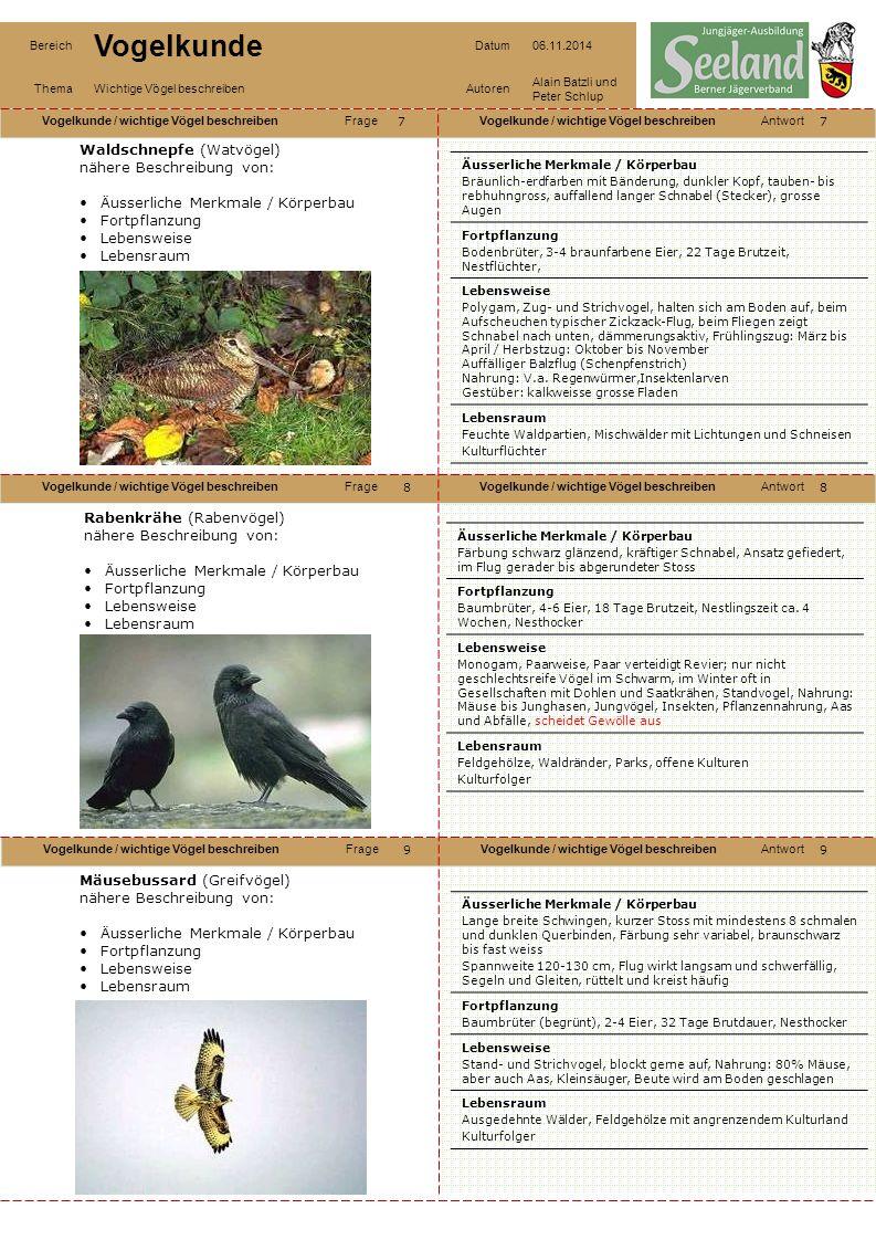 Waldschnepfe (Watvögel) nähere Beschreibung von: