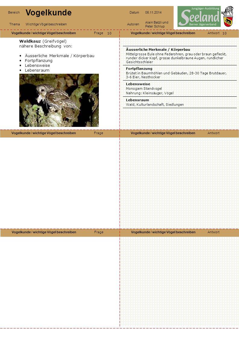 Waldkauz (Greifvögel) nähere Beschreibung von: