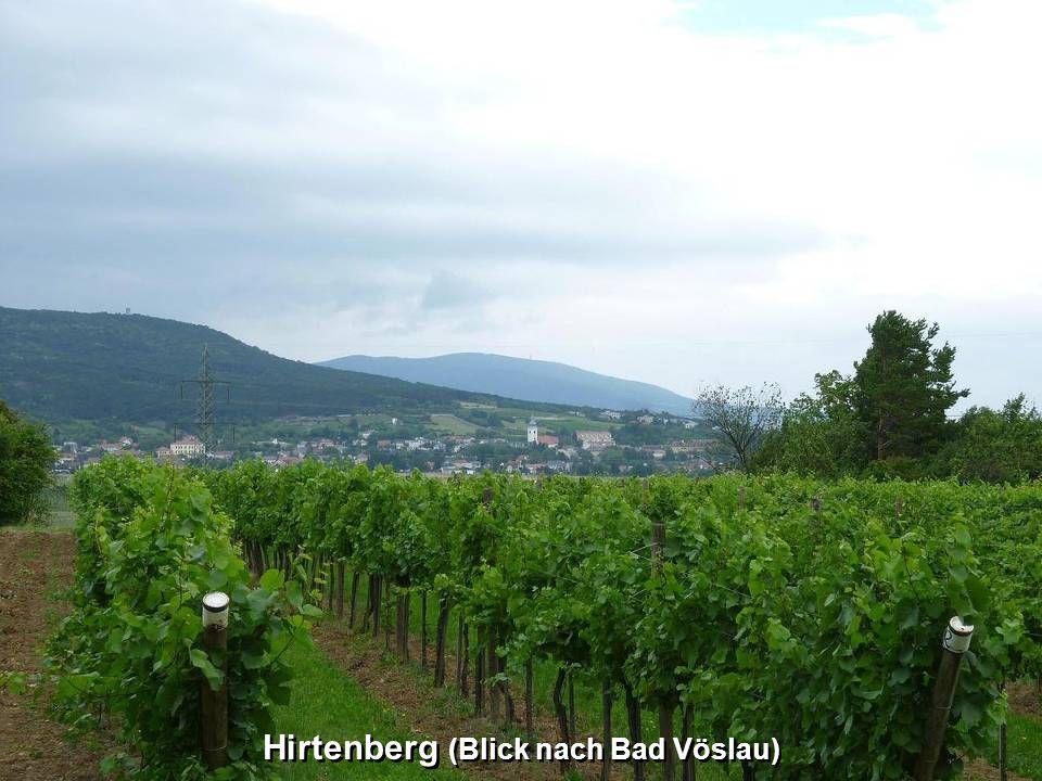 Hirtenberg (Blick nach Bad Vöslau)