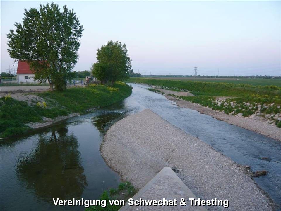 Vereinigung von Schwechat & Triesting