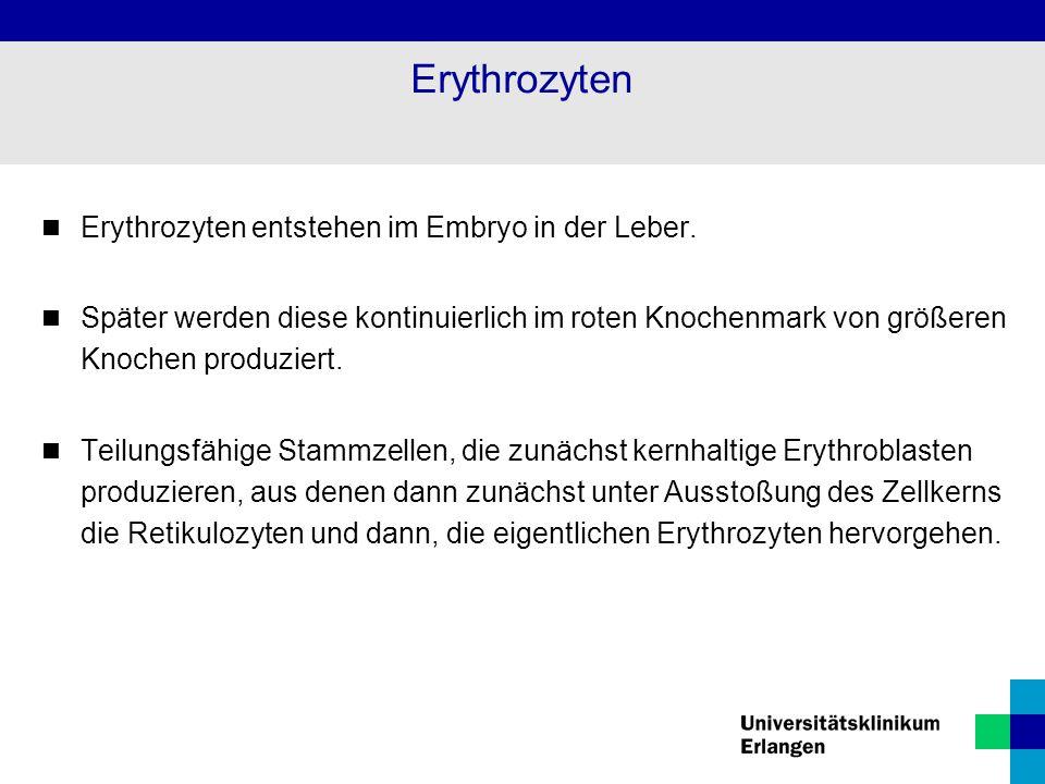 Erythrozyten Erythrozyten entstehen im Embryo in der Leber.