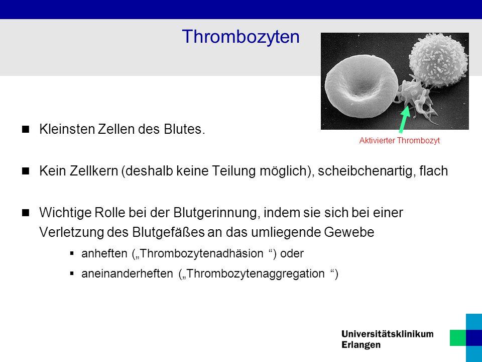 Thrombozyten Kleinsten Zellen des Blutes.