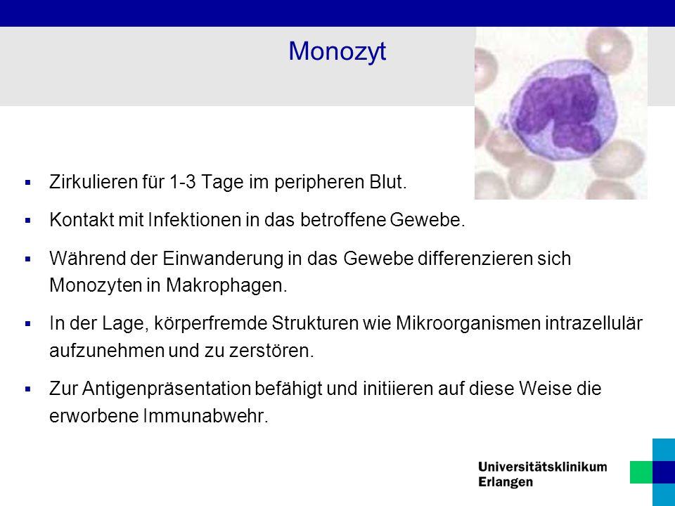 Monozyt Zirkulieren für 1-3 Tage im peripheren Blut.