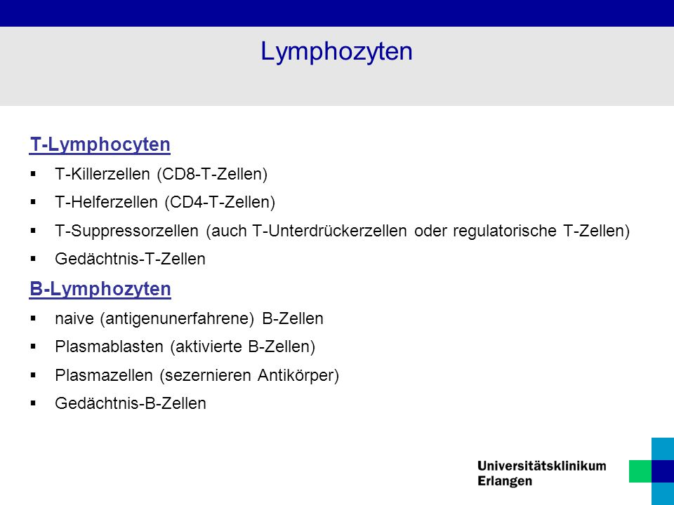 Lymphozyten T-Lymphocyten B-Lymphozyten T-Killerzellen (CD8-T-Zellen)
