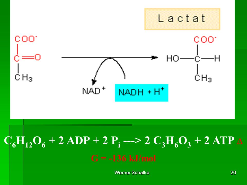 C6H12O6 + 2 ADP + 2 Pi ---> 2 C3H6O3 + 2 ATP D G = -136 kJ/mol