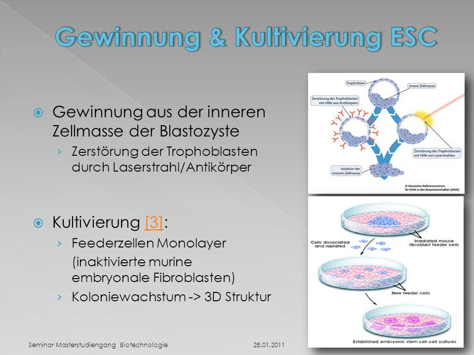 Gewinnung & Kultivierung ESC