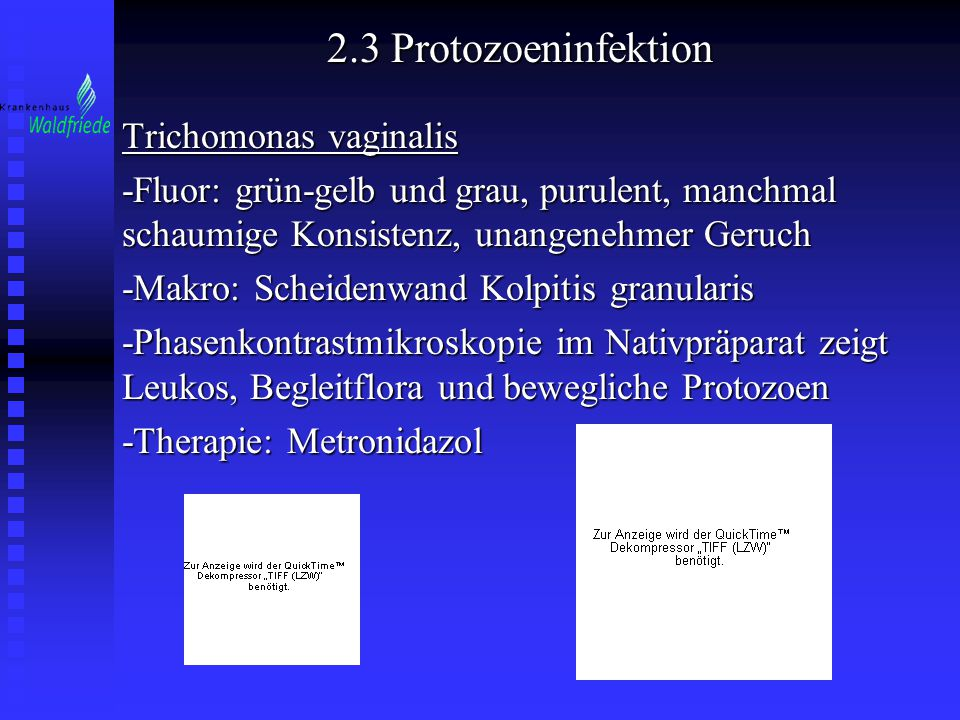 2.3 Protozoeninfektion Trichomonas vaginalis