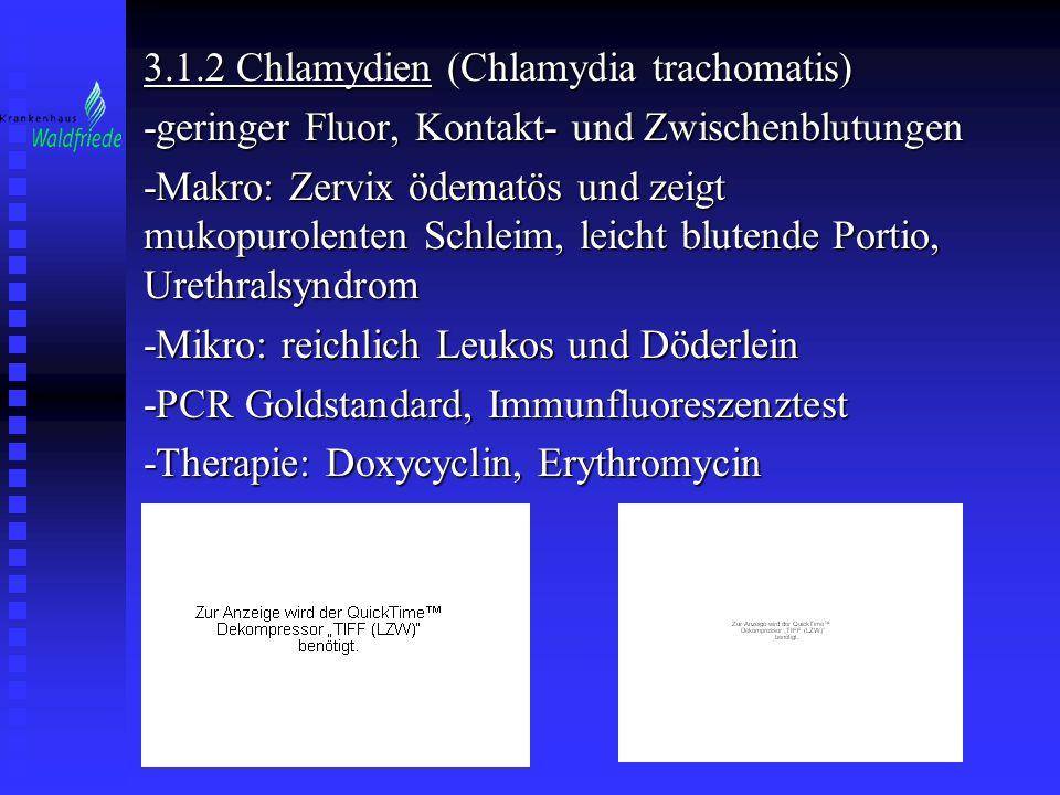 3.1.2 Chlamydien (Chlamydia trachomatis)