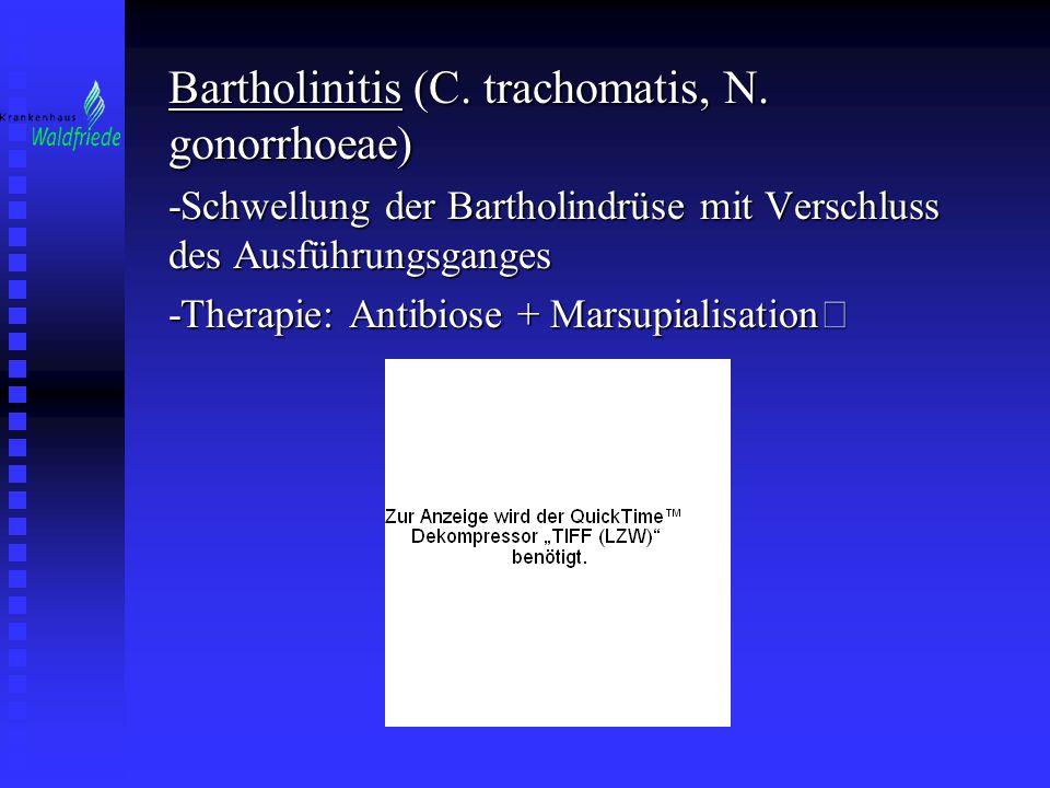Bartholinitis (C. trachomatis, N. gonorrhoeae)