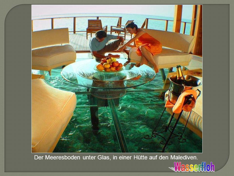 Der Meeresboden unter Glas, in einer Hütte auf den Malediven.
