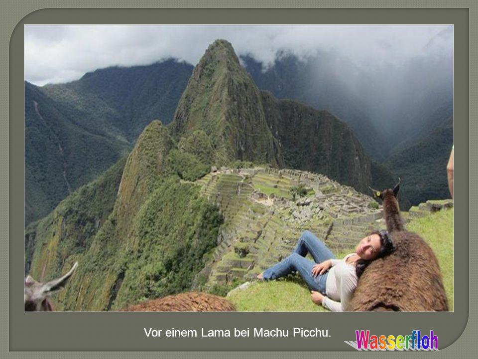 Vor einem Lama bei Machu Picchu.