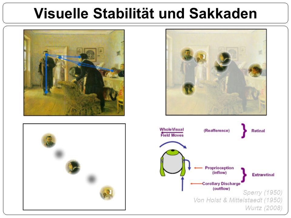 Visuelle Stabilität und Sakkaden