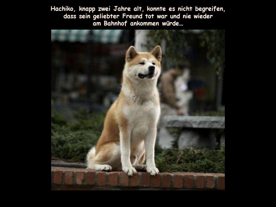 Hachiko, knapp zwei Jahre alt, konnte es nicht begreifen,