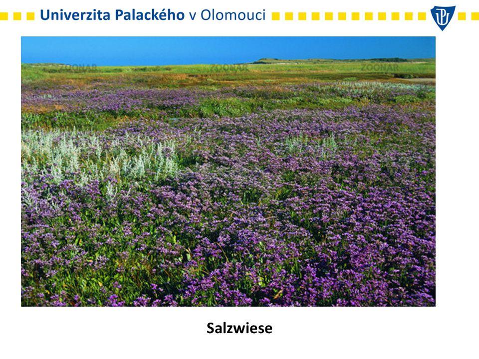 Salzwiese