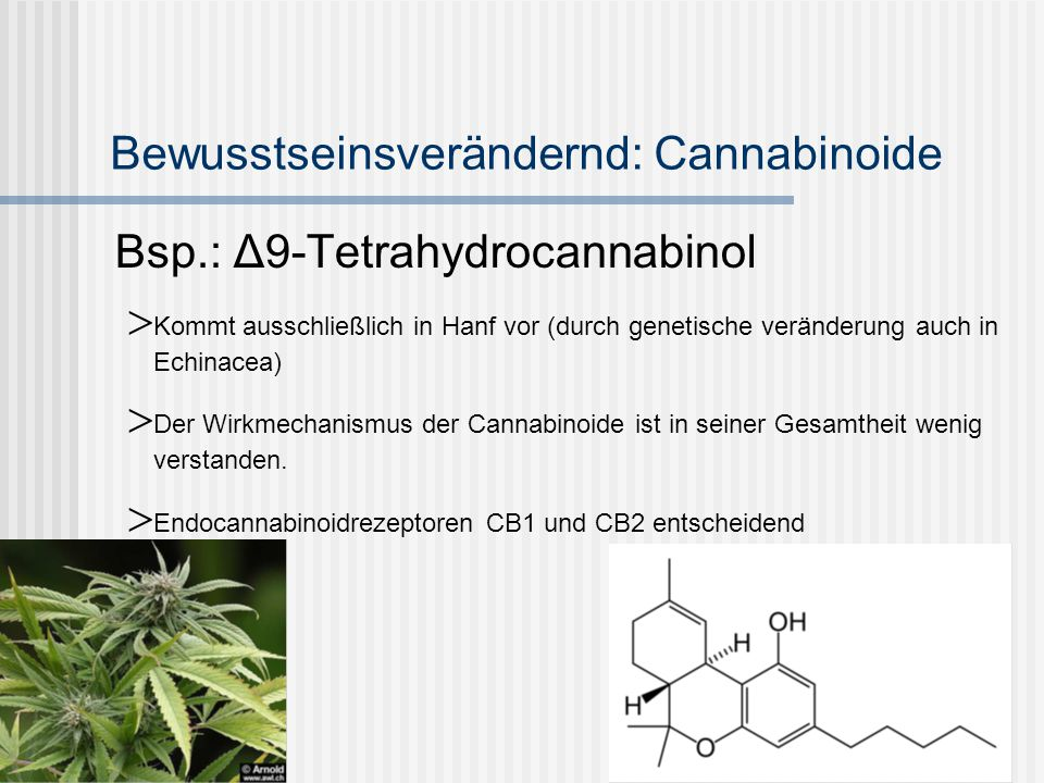 Bewusstseinsverändernd: Cannabinoide
