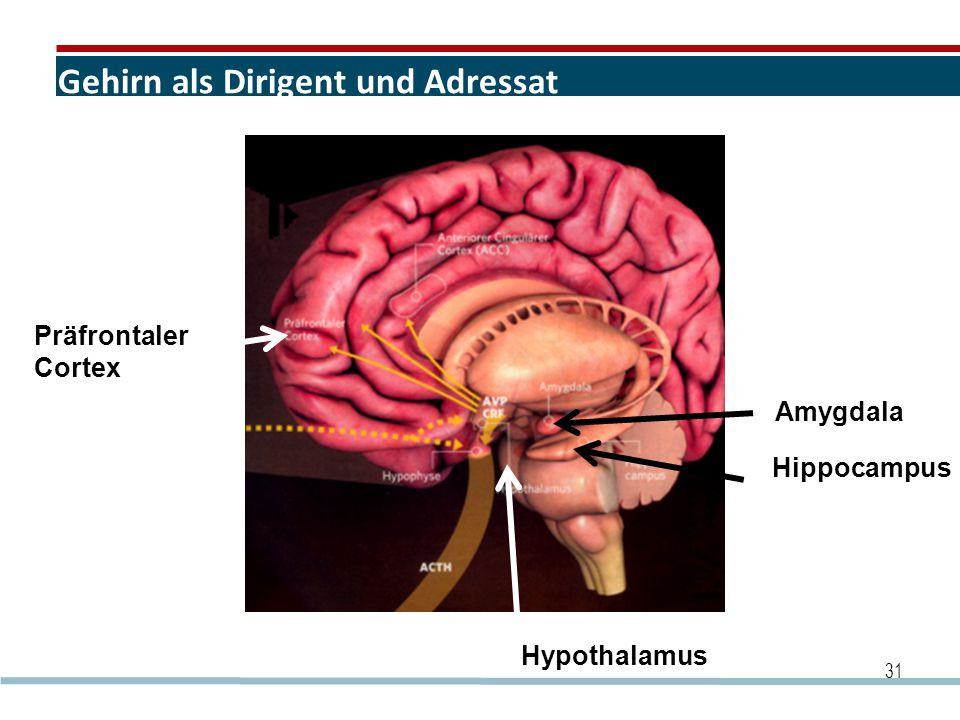 Gehirn als Dirigent und Adressat