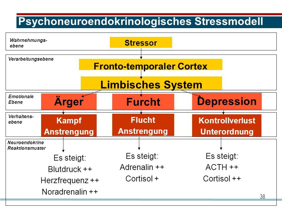 Psychoneuroendokrinologisches Stressmodell