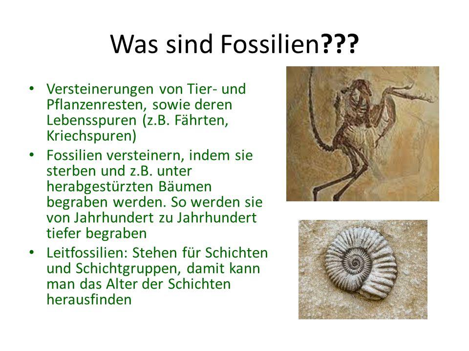 Was sind Fossilien Versteinerungen von Tier- und Pflanzenresten, sowie deren Lebensspuren (z.B. Fährten, Kriechspuren)