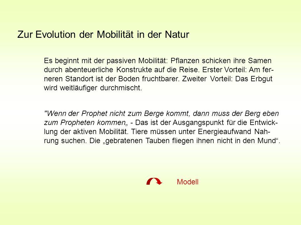 Zur Evolution der Mobilität in der Natur