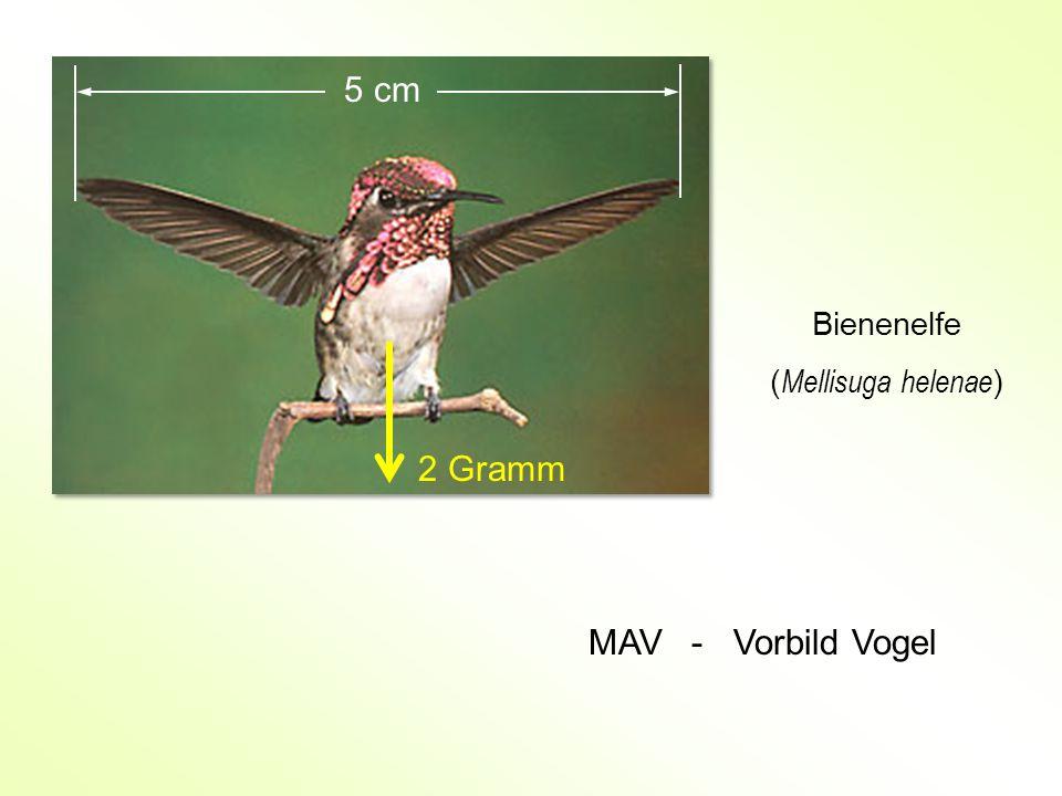 5 cm Bienenelfe (Mellisuga helenae) 2 Gramm MAV - Vorbild Vogel