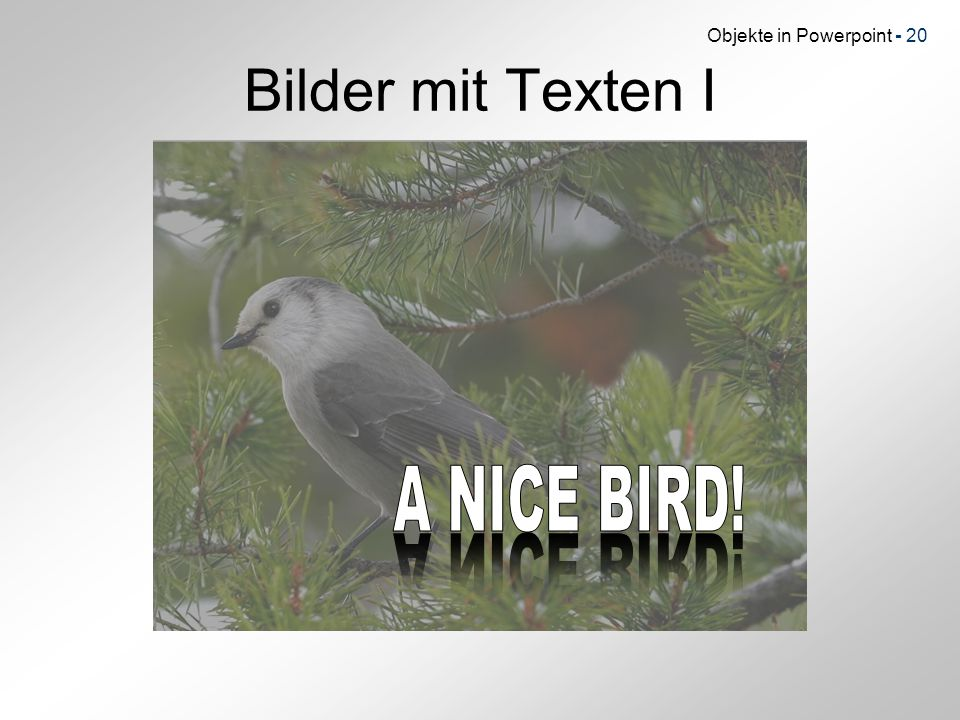 Bilder mit Texten I A NICE BIRD! A NICE BIRD!