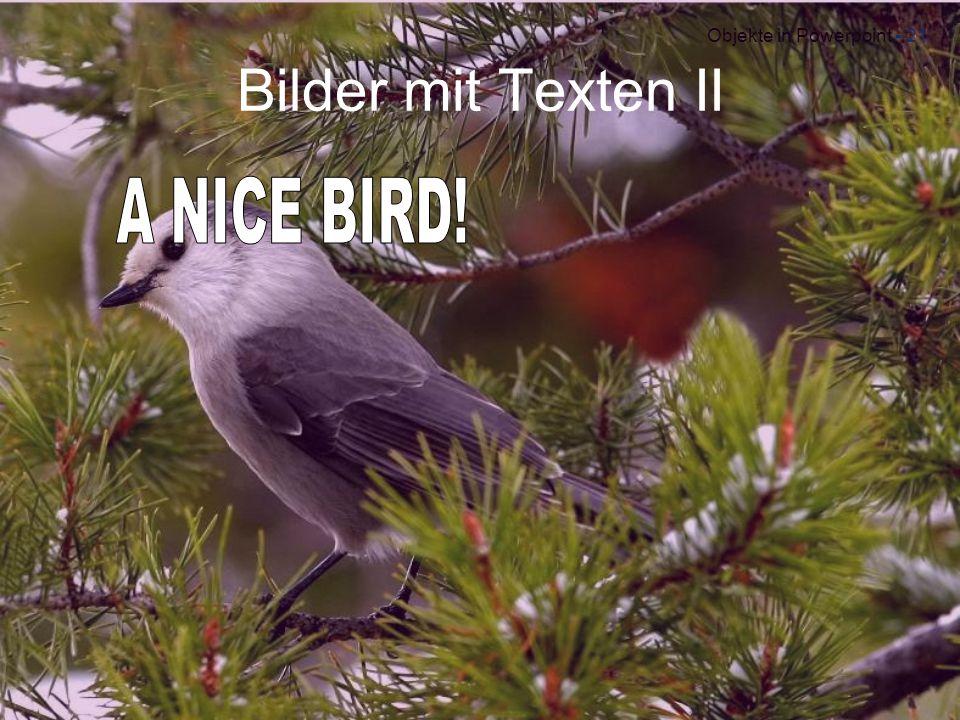 Bilder mit Texten II A NICE BIRD!