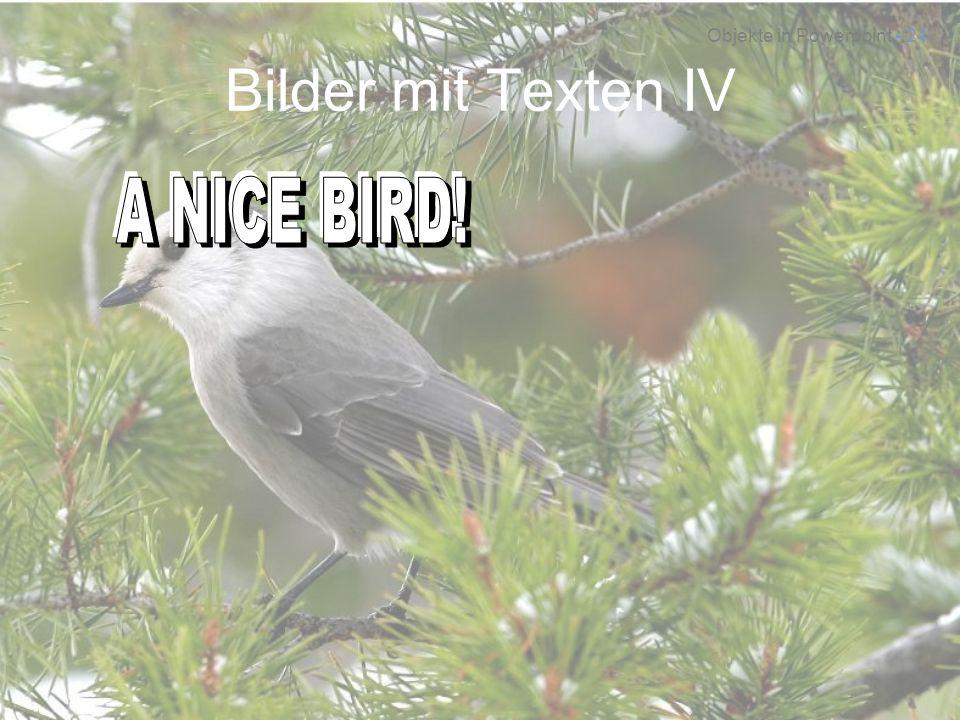 Bilder mit Texten IV A NICE BIRD! A NICE BIRD! A NICE BIRD!