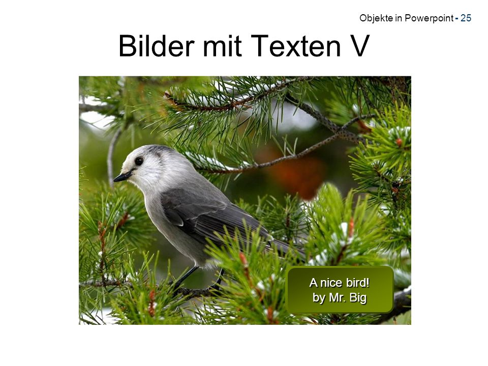 Bilder mit Texten V A nice bird! by Mr. Big