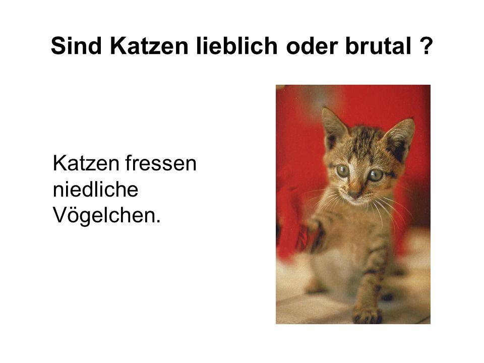 Sind Katzen lieblich oder brutal