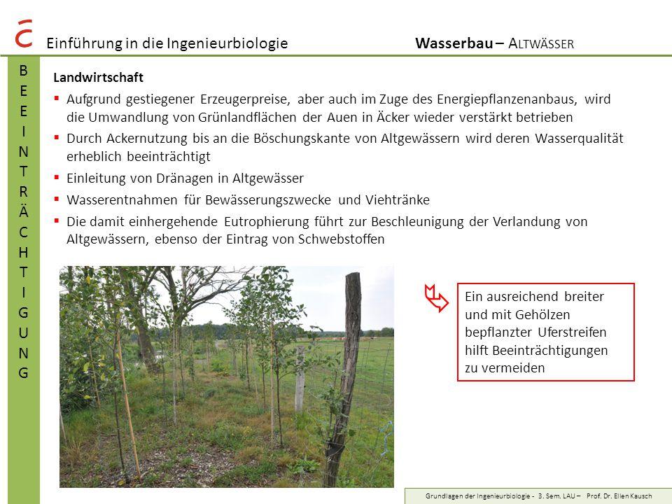  Einführung in die Ingenieurbiologie Wasserbau – Altwässer B E I N T