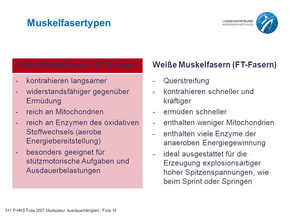 Rote Muskelfasern (ST-Fasern) Weiße Muskelfasern (FT-Fasern)