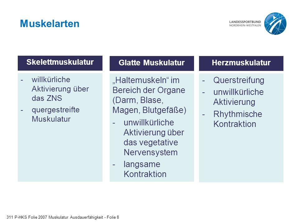 Muskelarten Glatte Muskulatur. willkürliche Aktivierung über das ZNS. quergestreifte Muskulatur.