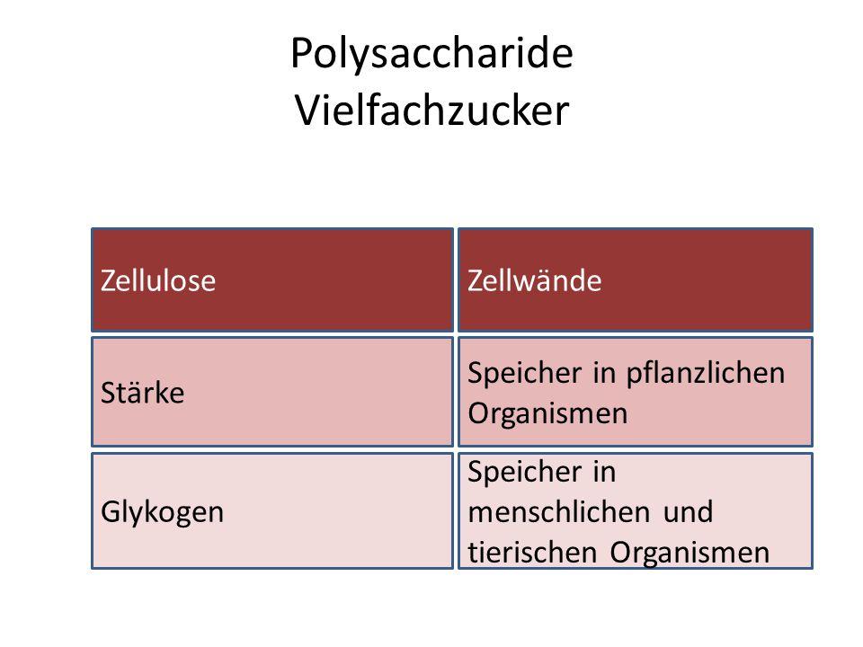Polysaccharide Vielfachzucker