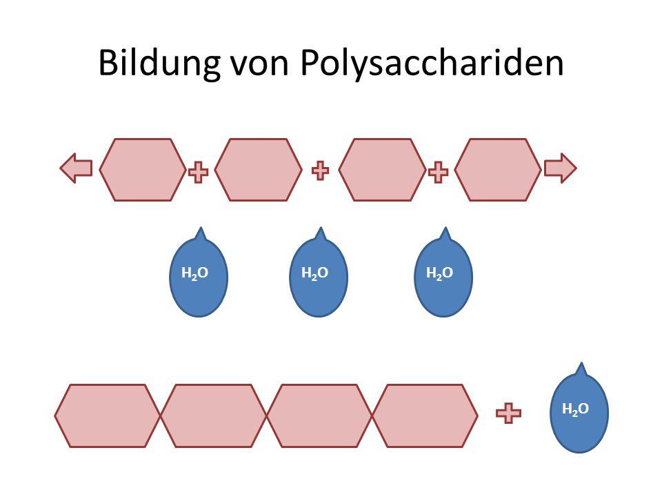 Bildung von Polysacchariden