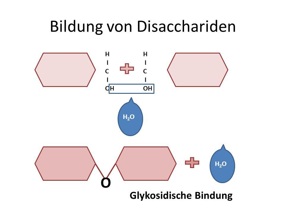 Bildung von Disacchariden