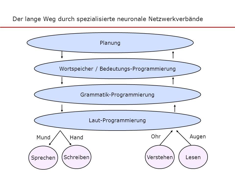 Der lange Weg durch spezialisierte neuronale Netzwerkverbände