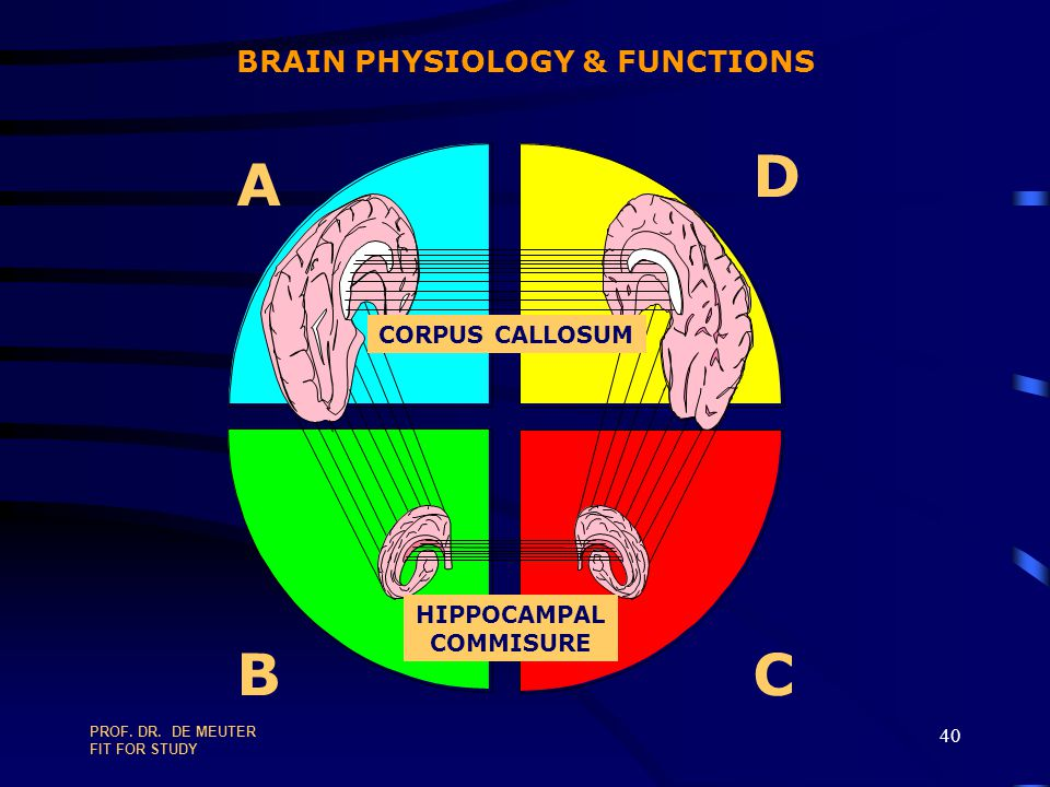 BRAIN PHYSIOLOGY & FUNCTIONS