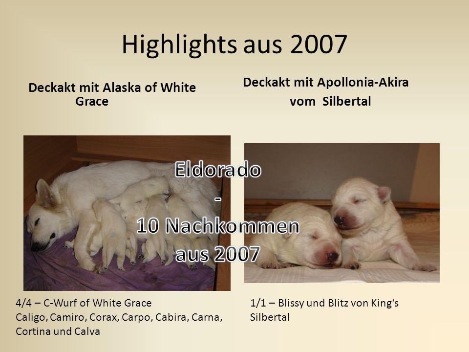 Highlights aus 2007 Eldorado - 10 Nachkommen aus 2007