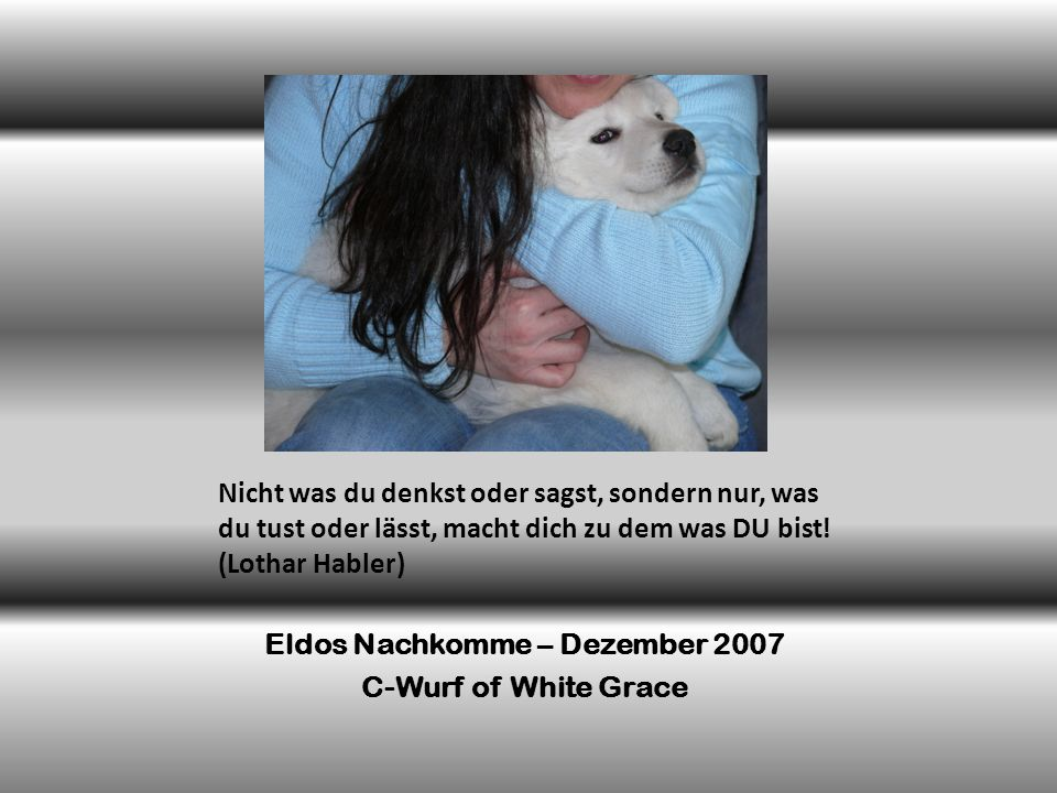 Eldos Nachkomme – Dezember 2007
