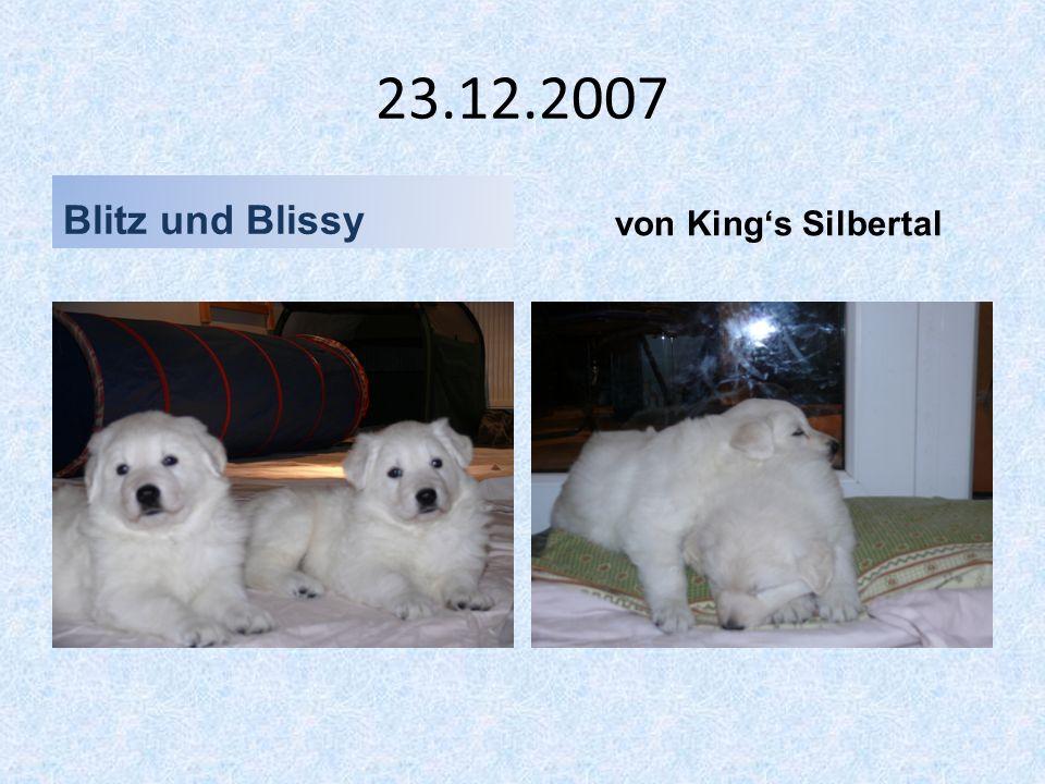 23.12.2007 Blitz und Blissy von King's Silbertal