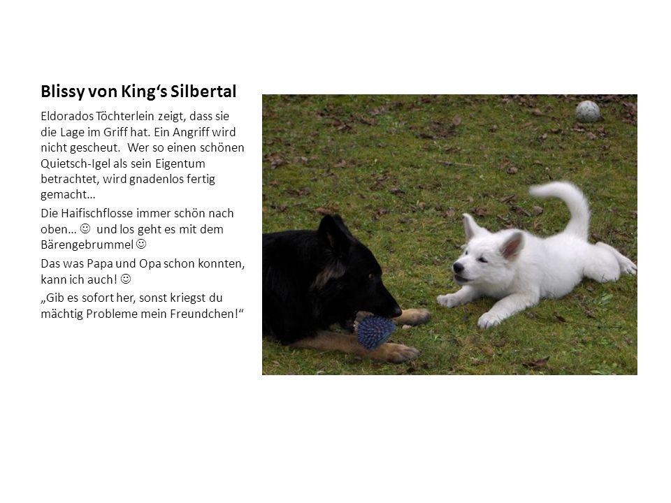 Blissy von King's Silbertal