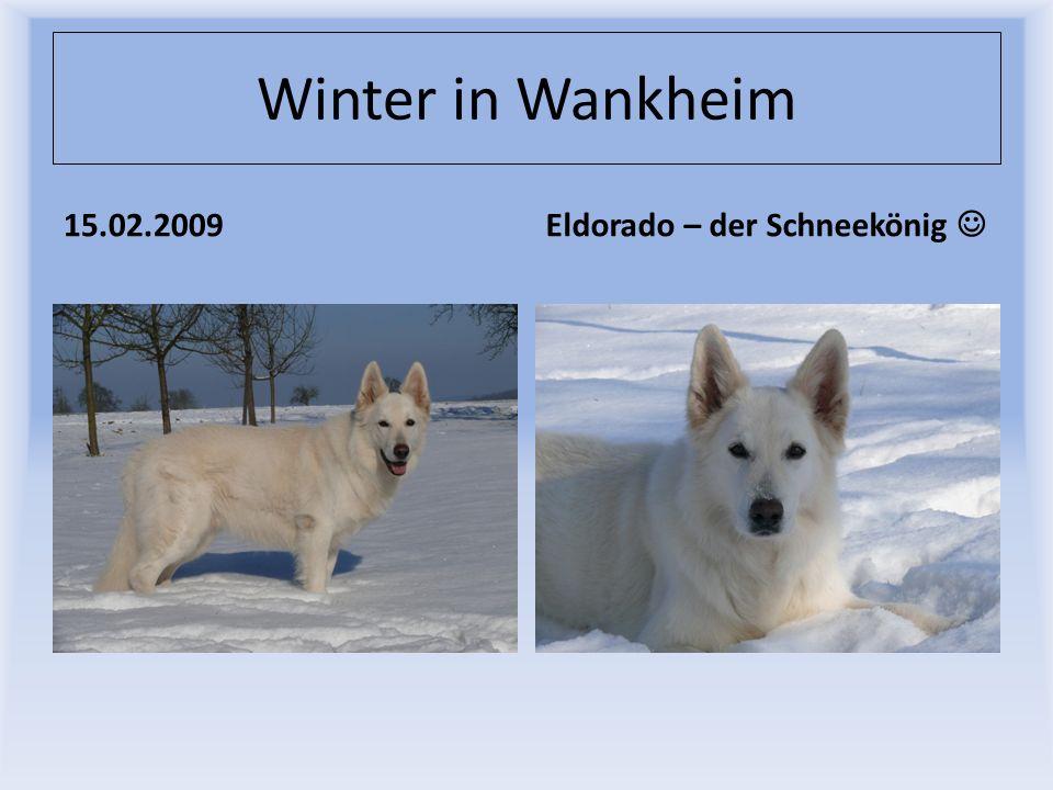 Winter in Wankheim 15.02.2009 Eldorado – der Schneekönig 