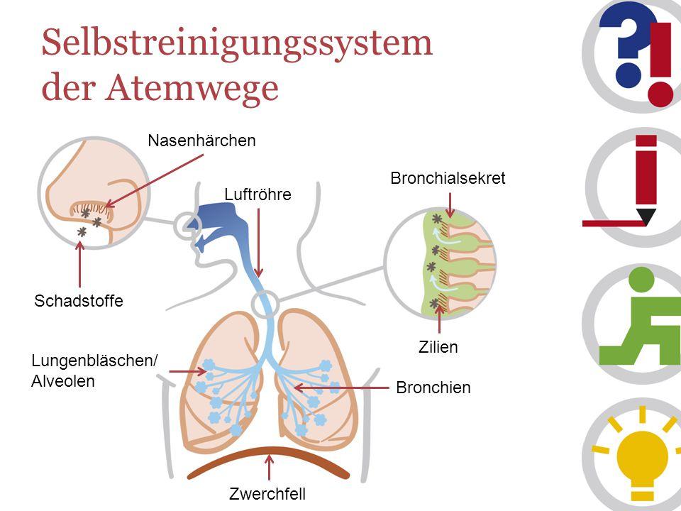 Selbstreinigungssystem der Atemwege